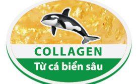Collagen-tu-ca-bien-sau---Phat-hien-moi-nhat-giup-lam-dep-da-collagen-bien-sau-lam-dep-da--1--1456305951-width352height249