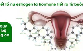noi-tiet-to-nu-estrogen-la-gi