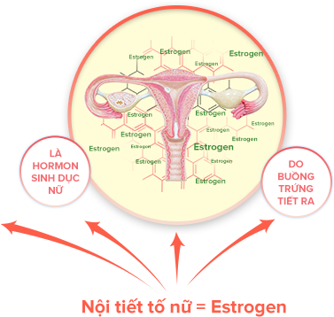 estrogen-co-tac-dung-gi