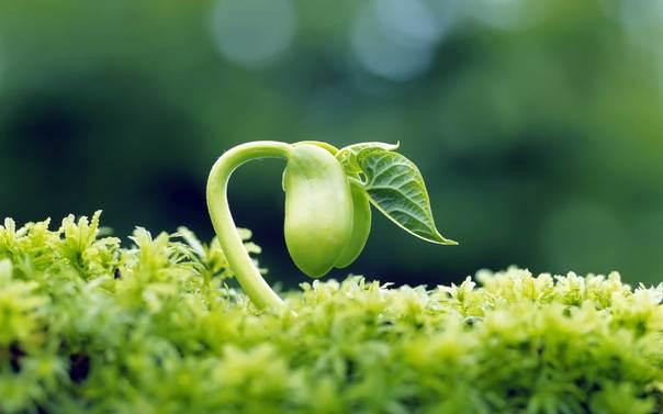 Isoflavones trong mầm đậu nành có lợi cho phái đẹp thế nào?