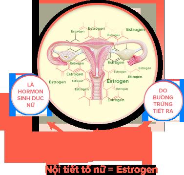 Nội tiết tố nữ là gì? nguyên nhân, dấu hiệu, cách chữa mất cân bằng nội tiết tố nữ