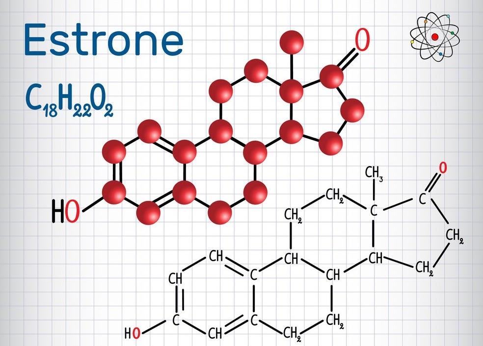 Estrone là gì và nó có vai trò như thế nào đối với phụ nữ?