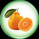 Chiết xuất cam vàng